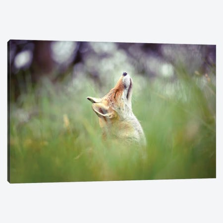 Head Up High Canvas Print #RRA22} by Roeselien Raimond Canvas Artwork