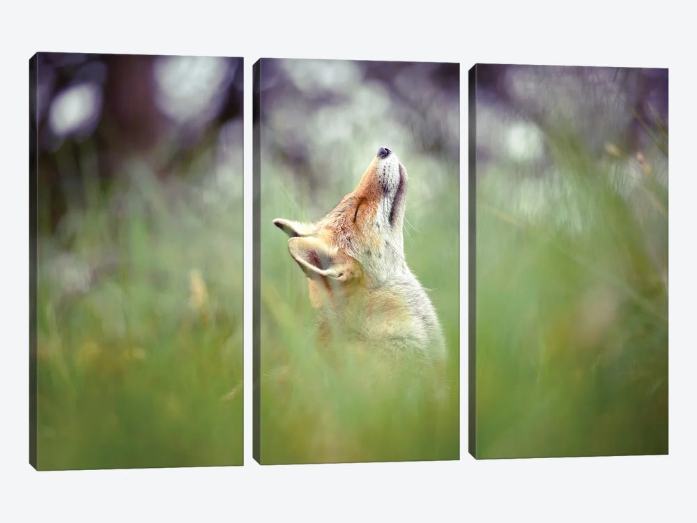 Head Up High by Roeselien Raimond 3-piece Canvas Art