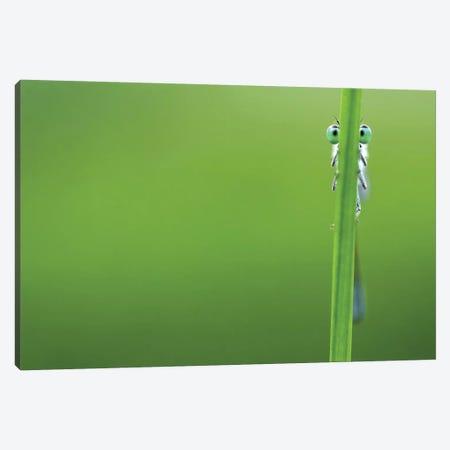 I'm Hiding Canvas Print #RRA24} by Roeselien Raimond Canvas Print