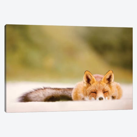 Lazy Fox Is Lazy Canvas Print #RRA26} by Roeselien Raimond Canvas Art Print
