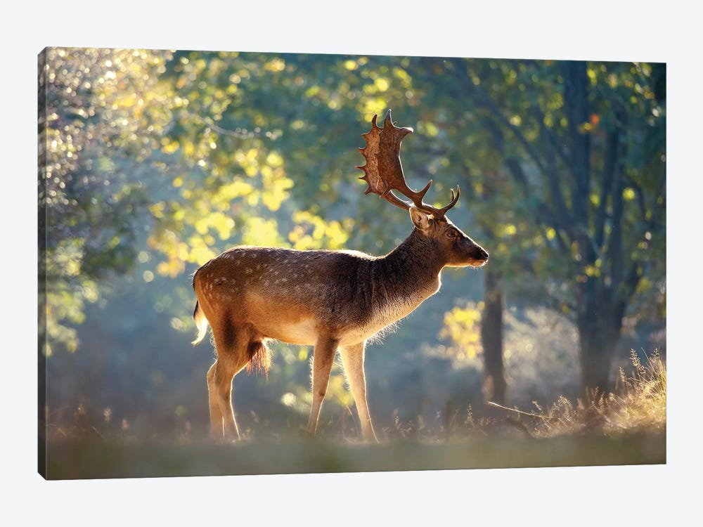 Morning Forest by Roeselien Raimond 1-piece Canvas Art Print