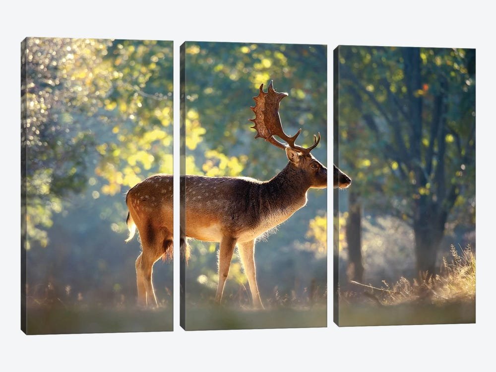 Morning Forest by Roeselien Raimond 3-piece Canvas Print