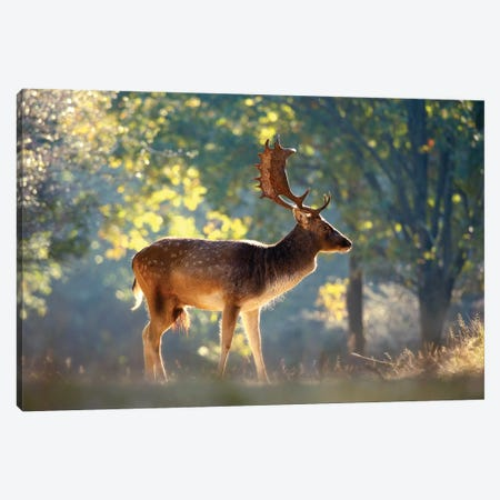 Morning Forest Canvas Print #RRA27} by Roeselien Raimond Canvas Art Print