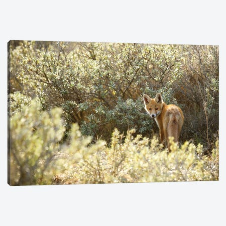 One Last Look Canvas Print #RRA28} by Roeselien Raimond Canvas Wall Art
