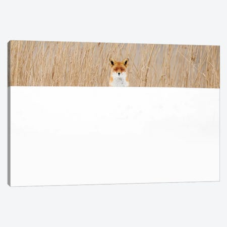 Peek-A-Boo Canvas Print #RRA29} by Roeselien Raimond Canvas Art