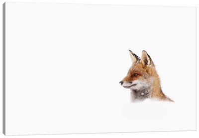 Red Fox, White Out Canvas Art Print