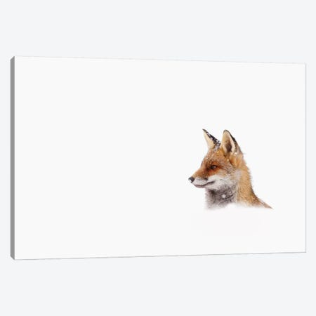 Red Fox, White Out Canvas Print #RRA30} by Roeselien Raimond Canvas Print