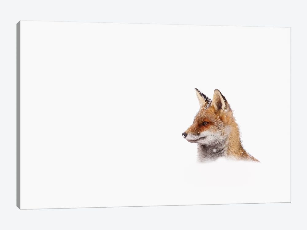 Red Fox, White Out by Roeselien Raimond 1-piece Canvas Print