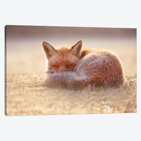 Sleeping Beauty Canvas Print #RRA33} by Roeselien Raimond Canvas Print