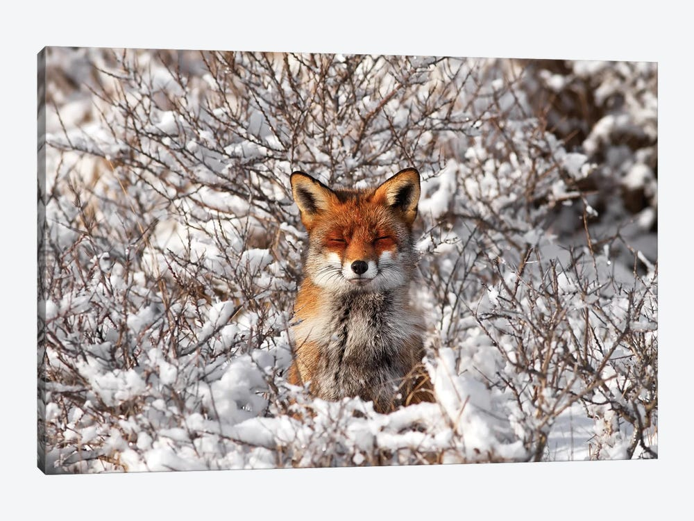 Snow Fox by Roeselien Raimond 1-piece Canvas Art Print