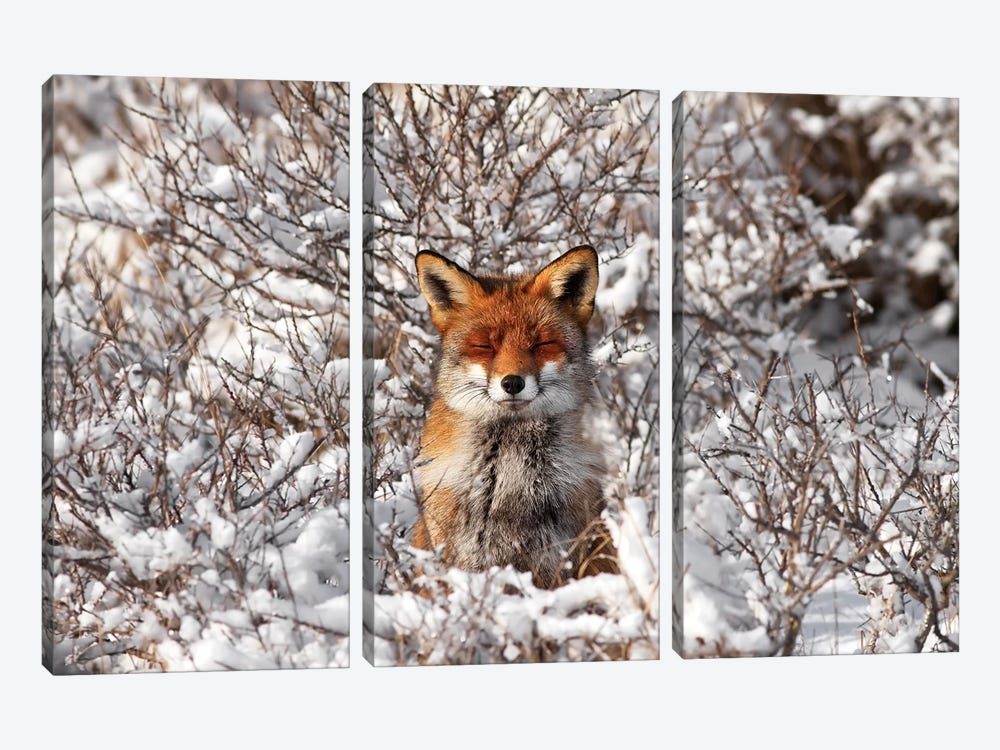 Snow Fox by Roeselien Raimond 3-piece Canvas Art Print
