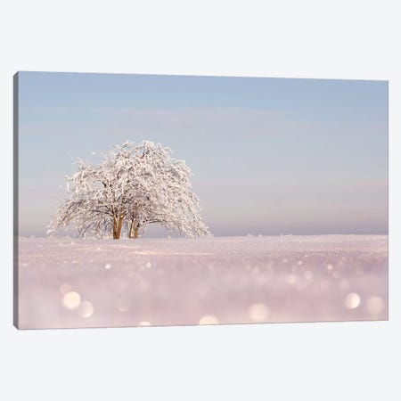 Sugar-Coated Canvas Print #RRA37} by Roeselien Raimond Canvas Artwork