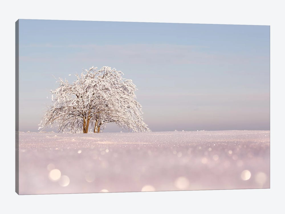 Sugar-Coated by Roeselien Raimond 1-piece Canvas Artwork