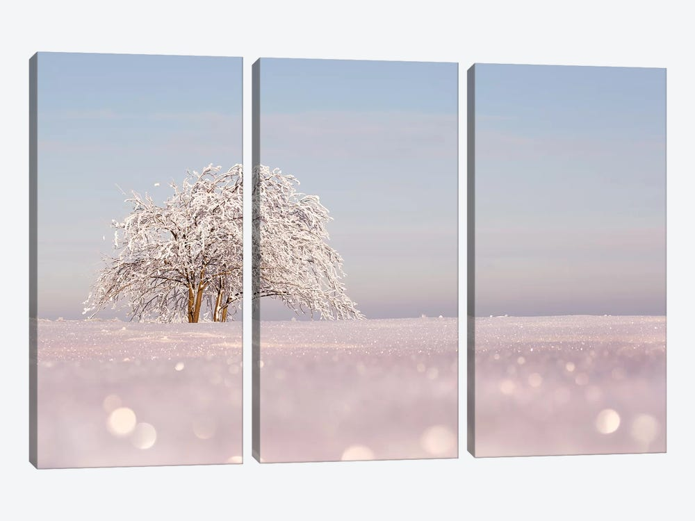 Sugar-Coated by Roeselien Raimond 3-piece Canvas Artwork