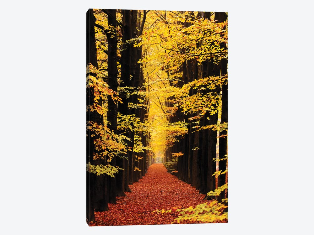 The Road To Anywhere by Roeselien Raimond 1-piece Canvas Art