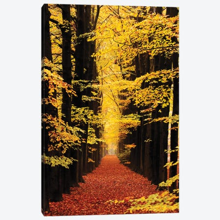 The Road To Anywhere Canvas Print #RRA39} by Roeselien Raimond Canvas Print