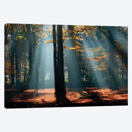Beams Canvas Print #RRA3} by Roeselien Raimond Canvas Art