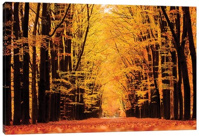 United Colors Of Autumn Canvas Art Print