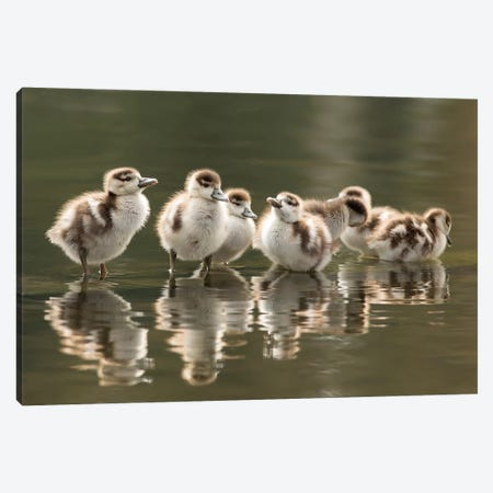 We Are Family Canvas Print #RRA42} by Roeselien Raimond Canvas Art