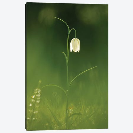 White Beauty Canvas Print #RRA43} by Roeselien Raimond Canvas Wall Art