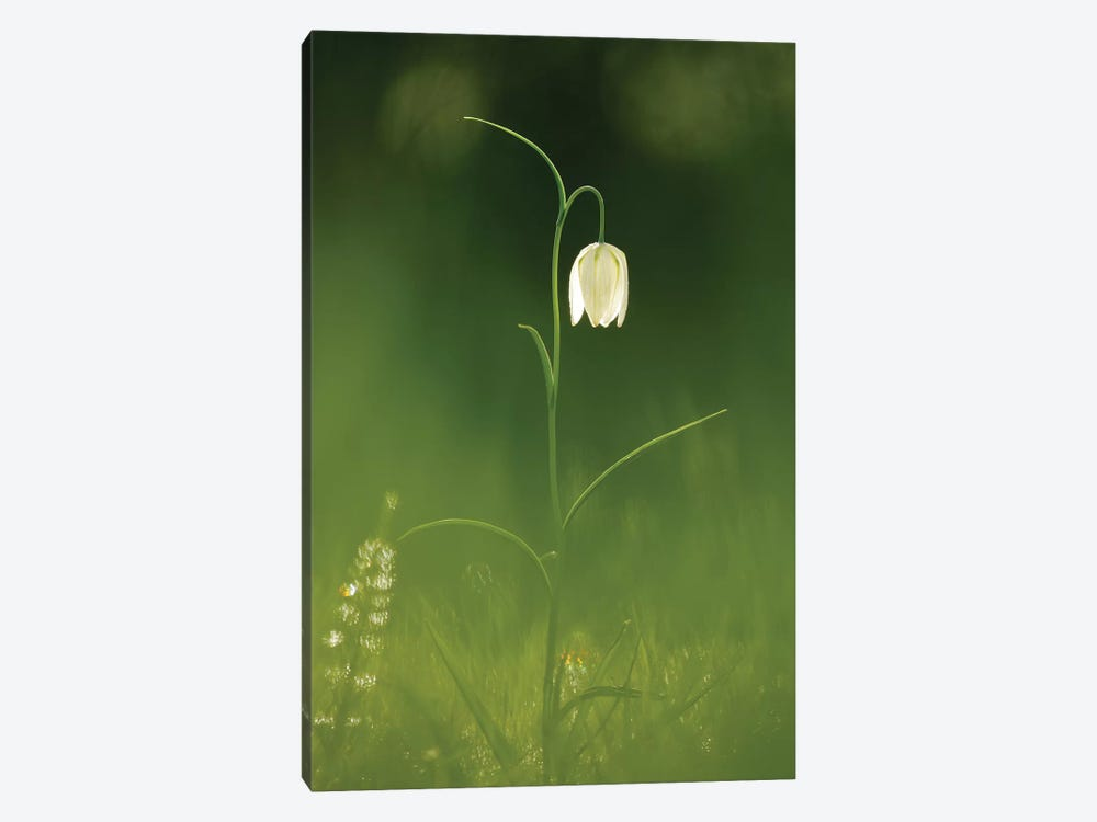 White Beauty by Roeselien Raimond 1-piece Canvas Art Print