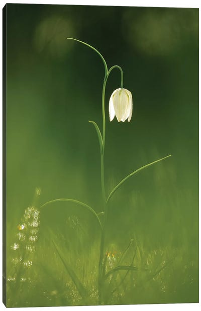 White Beauty Canvas Art Print