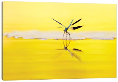 Yellow River Canvas Art Print