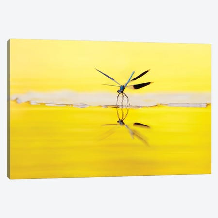 Yellow River Canvas Print #RRA44} by Roeselien Raimond Canvas Print