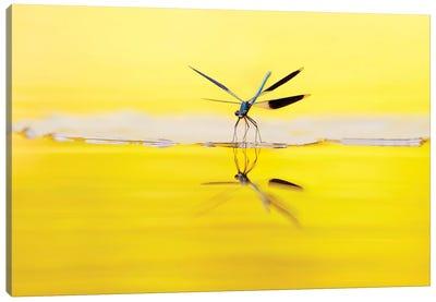Yellow River Canvas Art Print