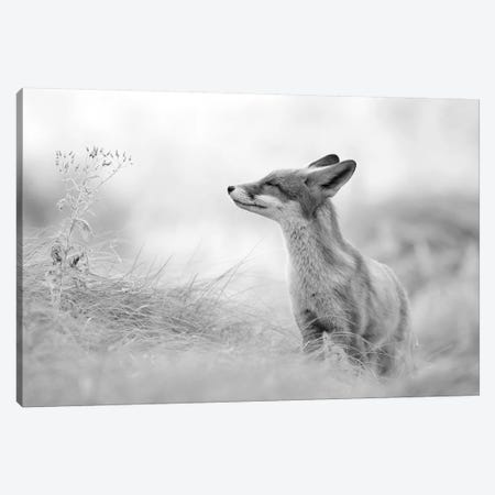 Zen Fox In Black And White Canvas Print #RRA45} by Roeselien Raimond Canvas Art Print