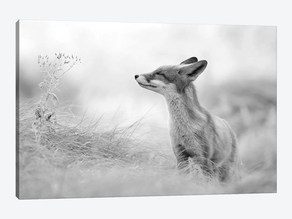 Zen Fox In Black And White by Roeselien Raimond 1-piece Canvas Art Print