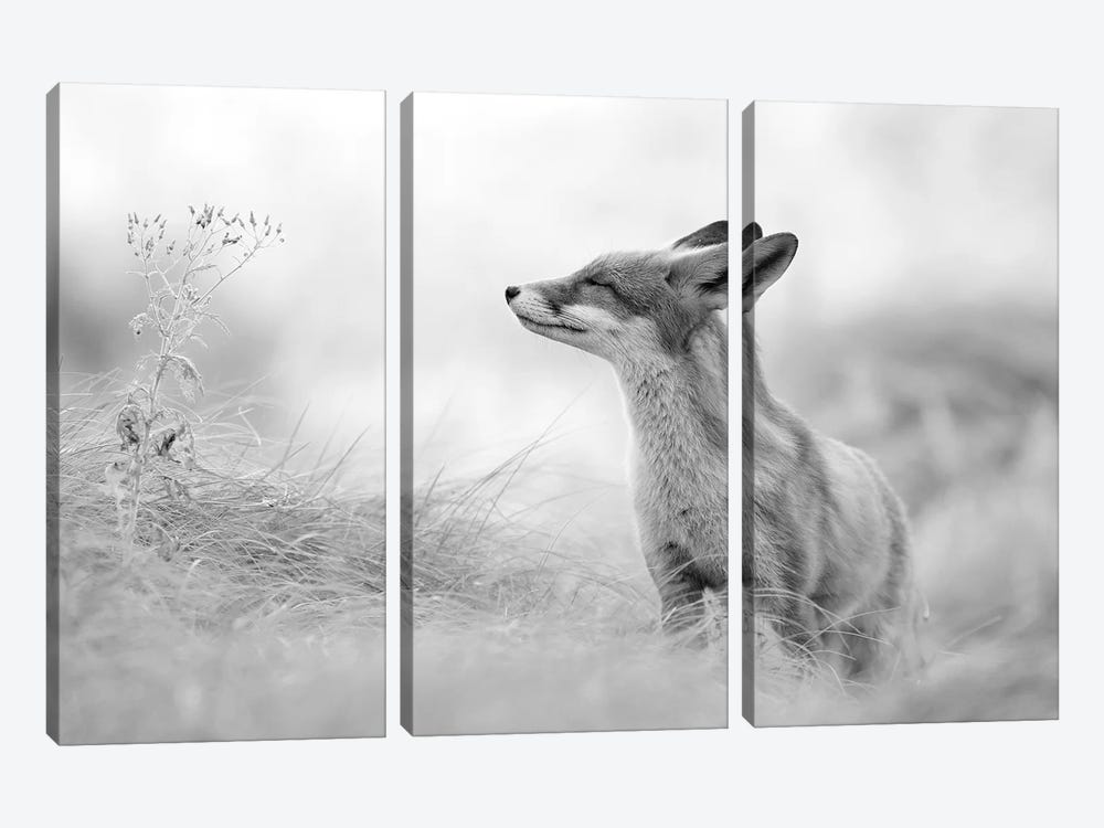 Zen Fox In Black And White by Roeselien Raimond 3-piece Canvas Print