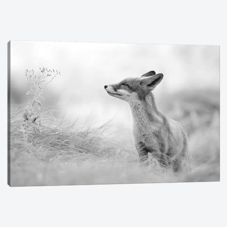 Zen Fox In Black And White 3-Piece Canvas #RRA45} by Roeselien Raimond Canvas Art Print