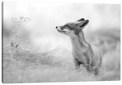 Zen Fox In Black And White Canvas Art Print
