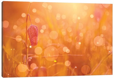 Bokeh Party Canvas Art Print