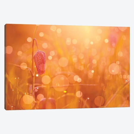Bokeh Party Canvas Print #RRA5} by Roeselien Raimond Art Print
