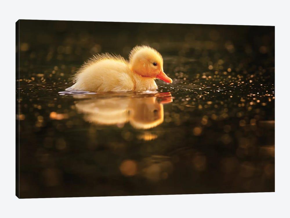 Duckie by Roeselien Raimond 1-piece Canvas Artwork