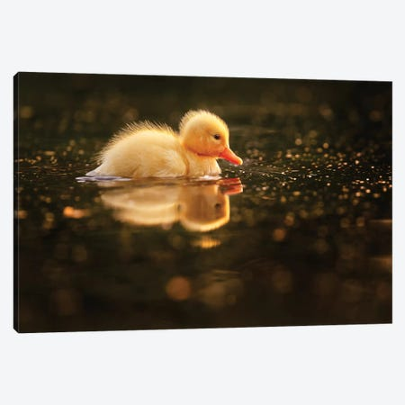 Duckie Canvas Print #RRA8} by Roeselien Raimond Canvas Art