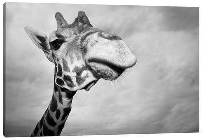 Giraffe, USA, Texas, Fossil Rim Wildlife Area, Canvas Art Print