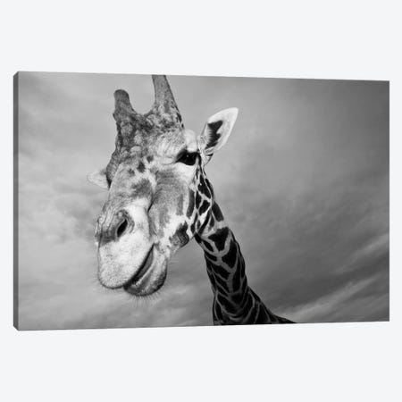 Giraffe, USA, Texas, Fossil Rim Wildlife Area, Canvas Print #RSH2} by Rob Sheppard Canvas Art