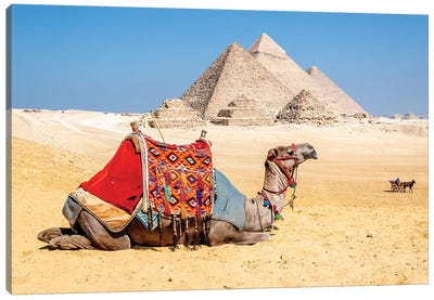 Camel Resting by the Pyramids, Giza, Egypt Canvas Art Print