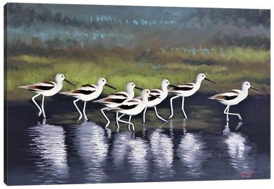 Seven Avocets Canvas Art Print