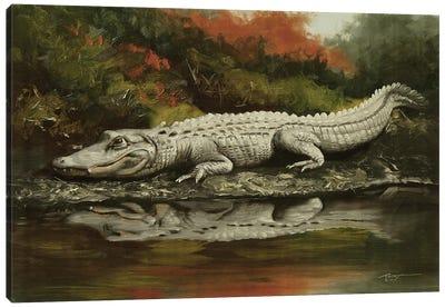 Aligator Living On The Edge Canvas Art Print