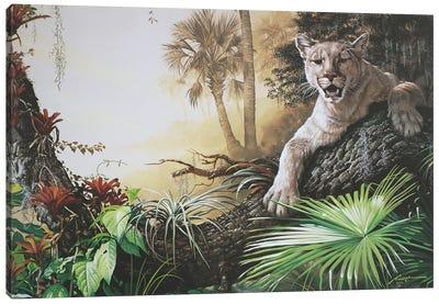 Florida Panther Canvas Art Print