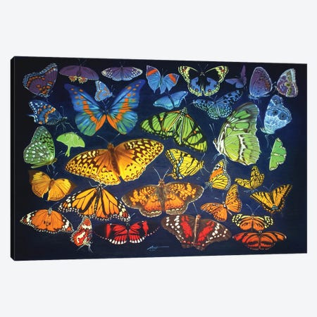 """Rainbow Of Butterflies Canvas Print #RSR216} by D. """"Rusty"""" Rust Art Print"""