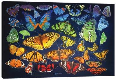 Rainbow Of Butterflies Canvas Art Print