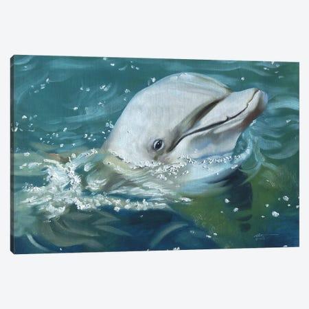 "Friendly Dolphin Canvas Print #RSR230} by D. ""Rusty"" Rust Canvas Art"