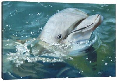 Friendly Dolphin Canvas Art Print