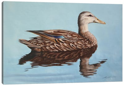 Mallard Duck Canvas Art Print
