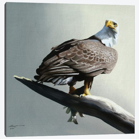 """Bald Eagle With Its Catch On Branch Canvas Print #RSR237} by D. """"Rusty"""" Rust Art Print"""